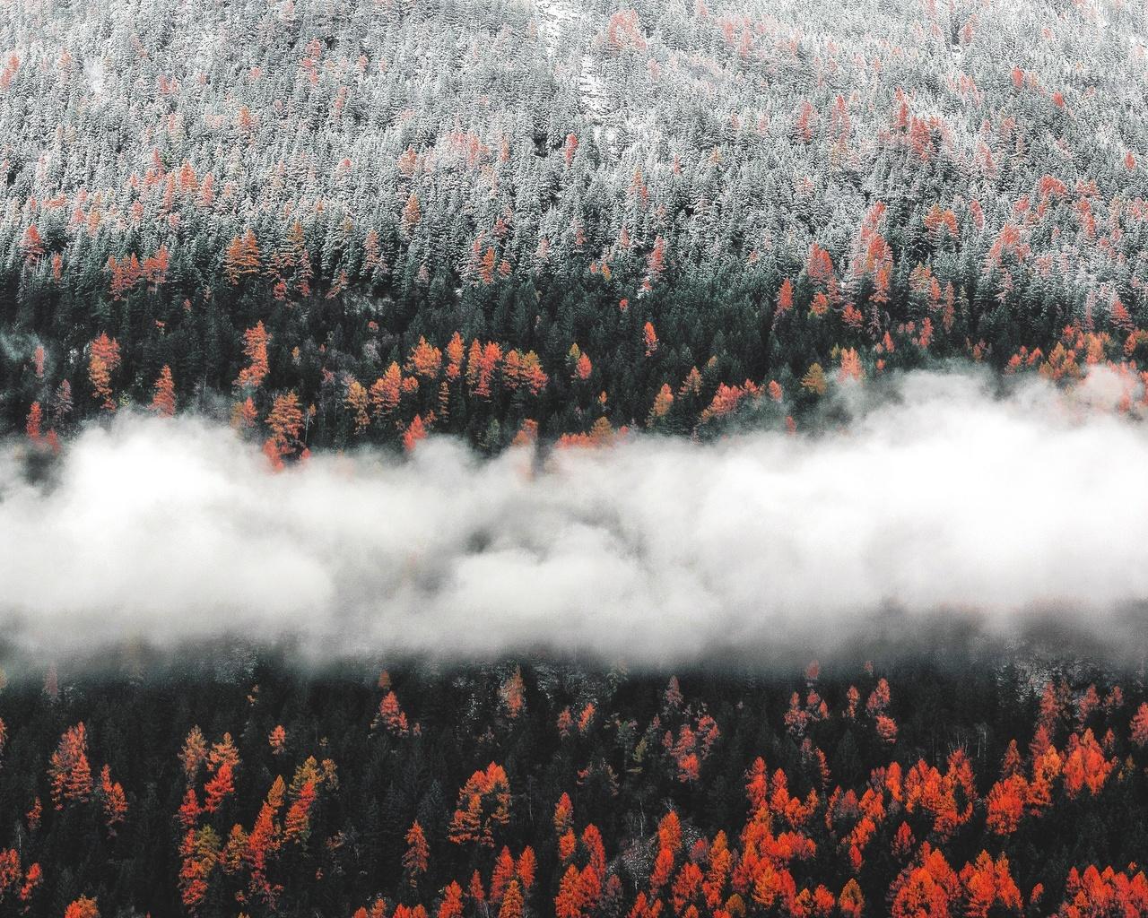 лес, облака, осень