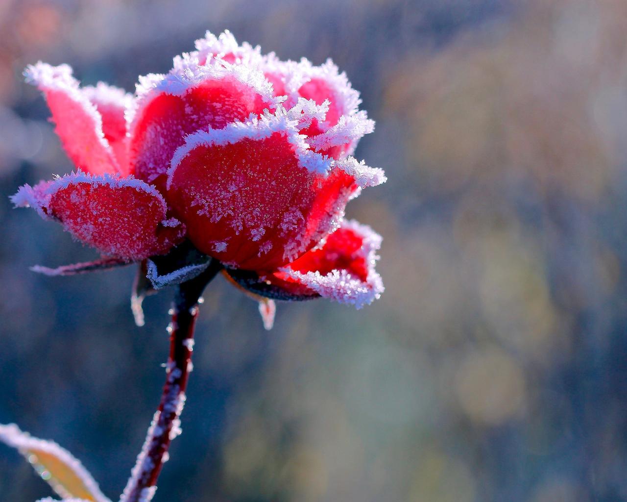 говорить мотрном, красивые картинки цветов и снега сестры