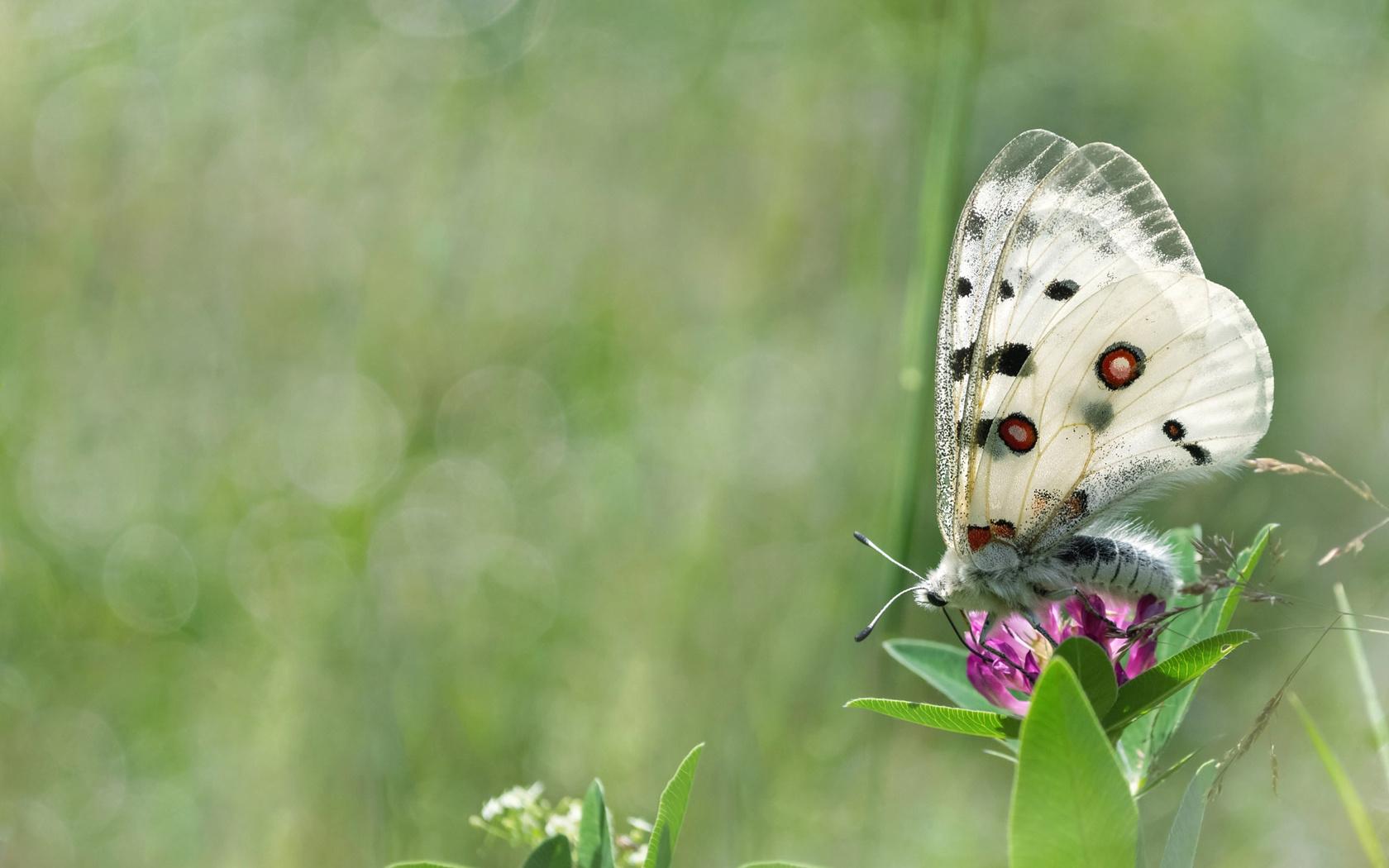 трава, лето, природа, бабочка, боке, макро, цветы