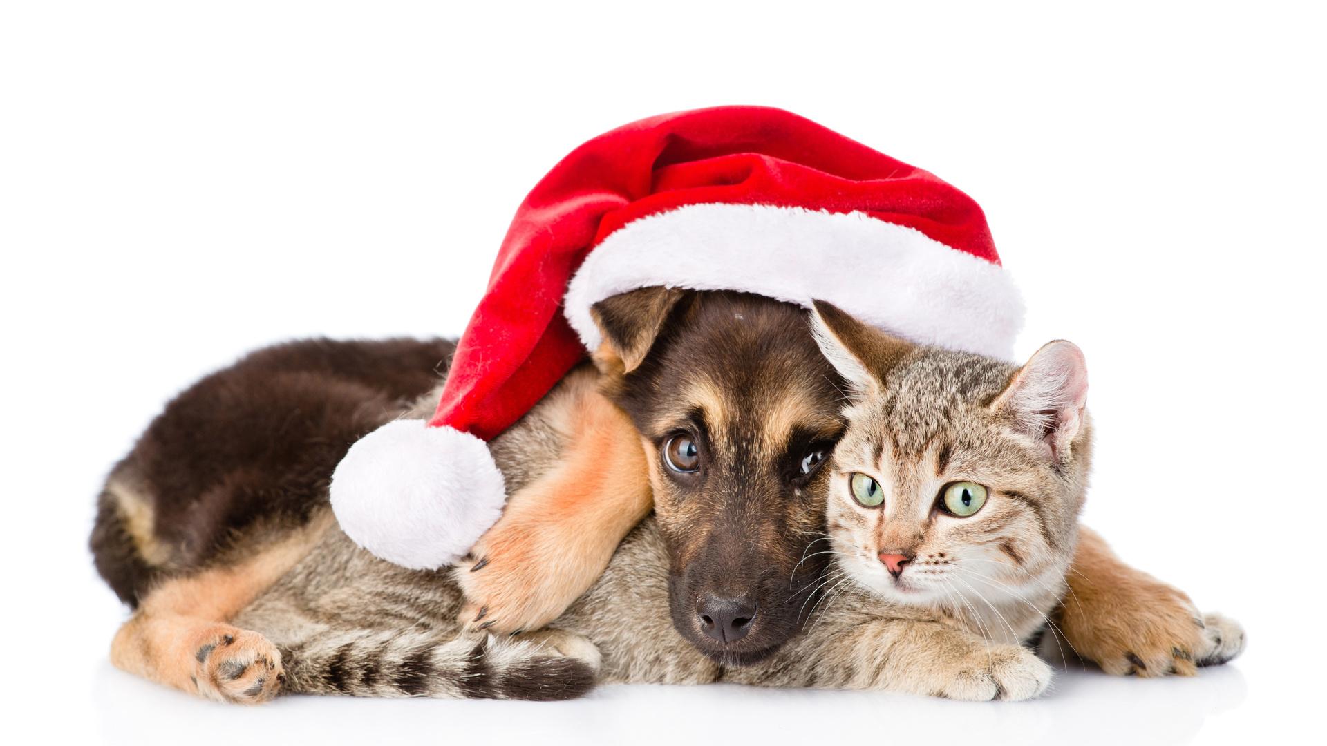 Снежная королева, новогодние картинки котенок и щенок