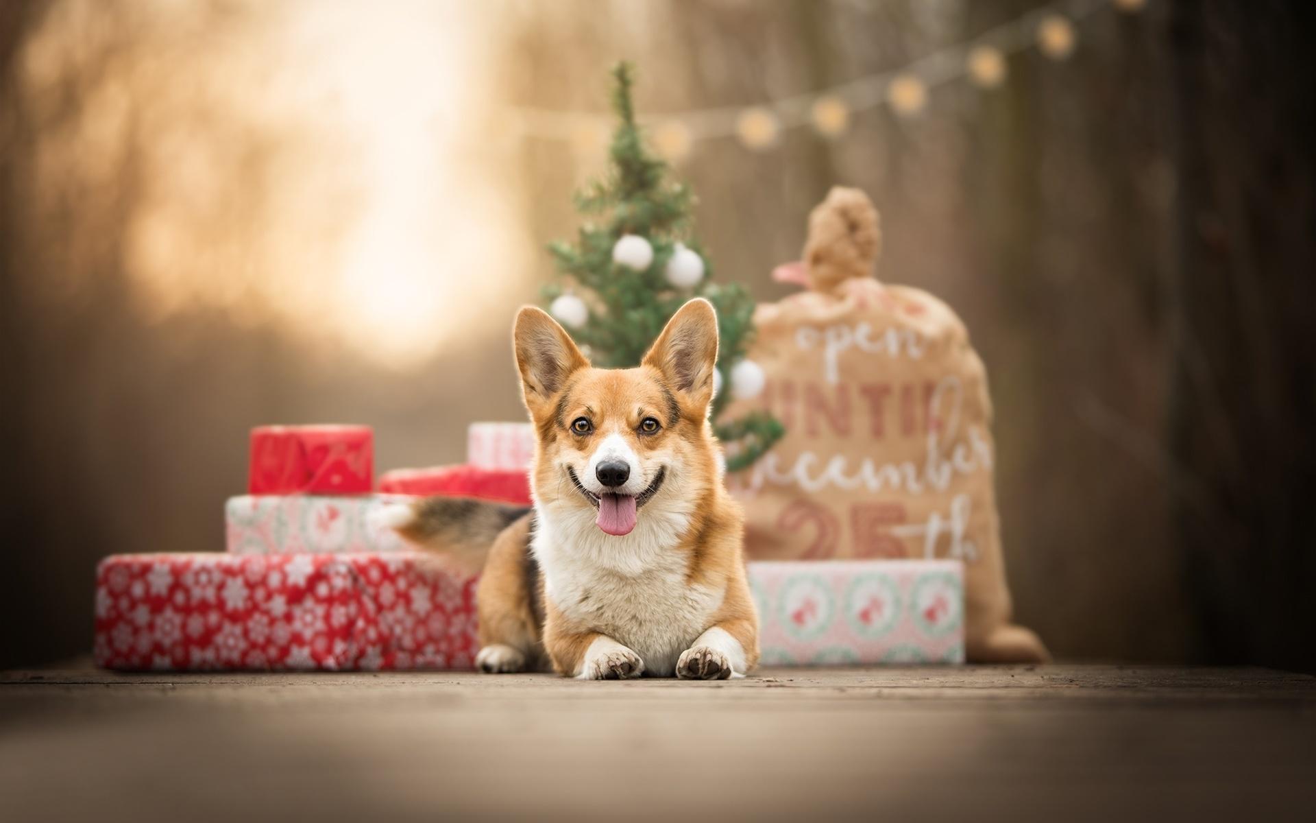 Спасибо, картинки праздничные с животными