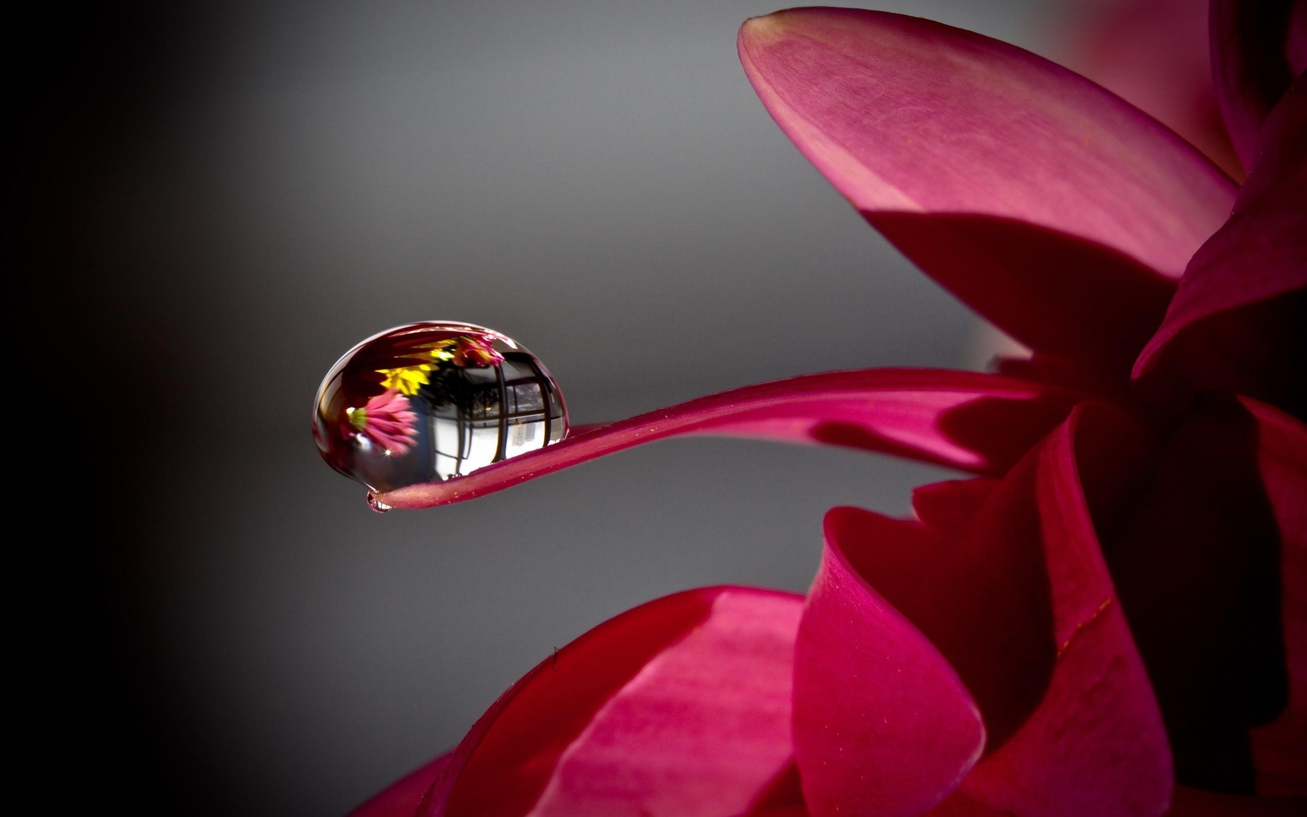 Цветы 3д картинки, картинки достопримечательности