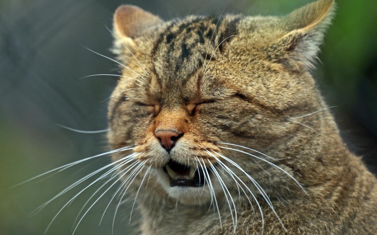 кот, природа, хищник
