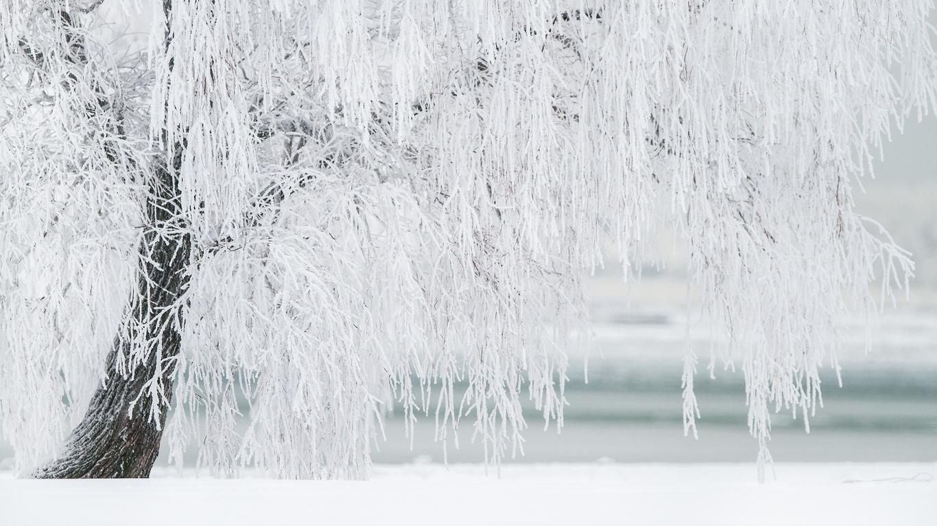 зима, дерево, белый, снег, ветки