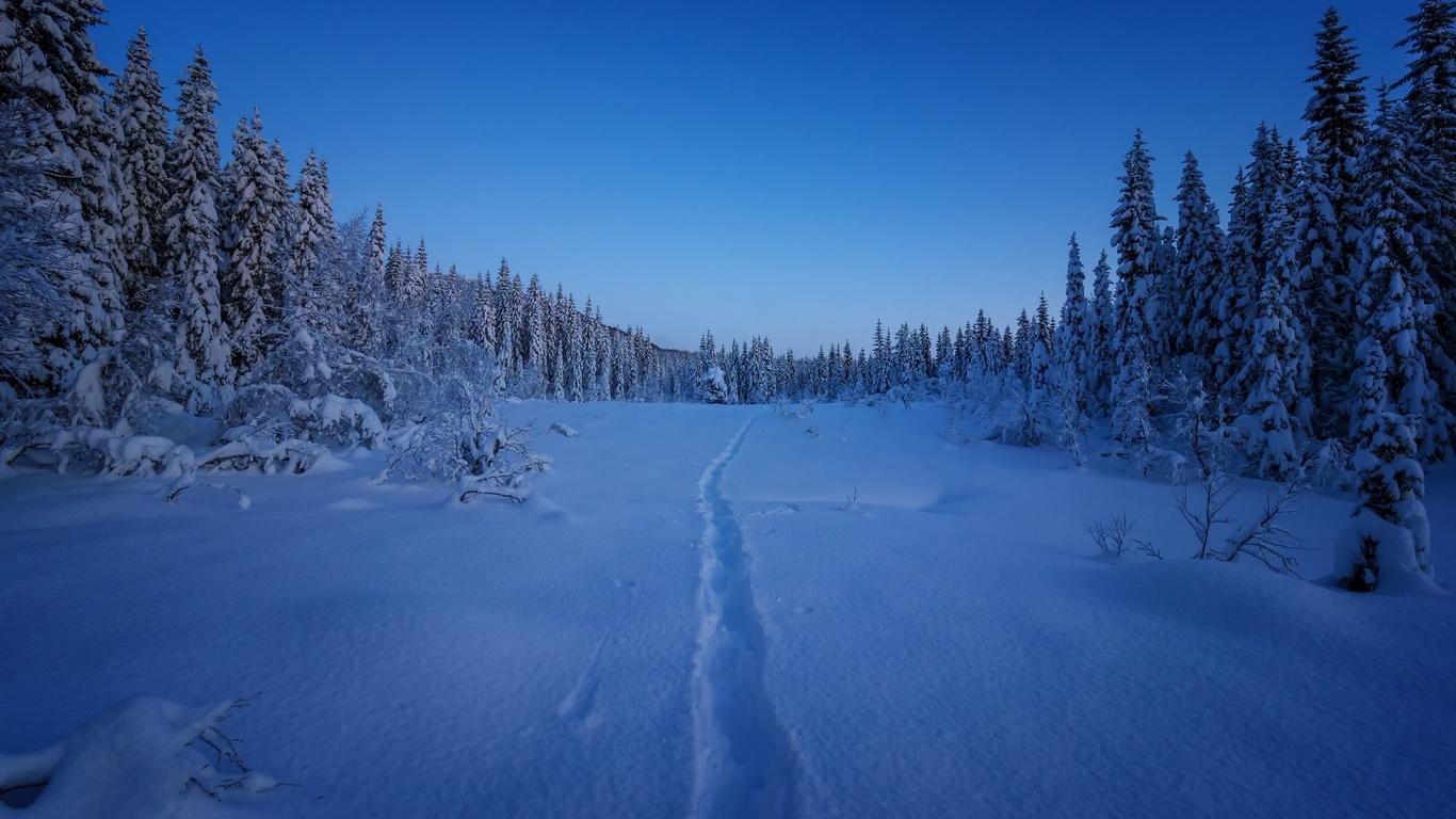 зима, снег, лес, поляна, тропа, норвегия
