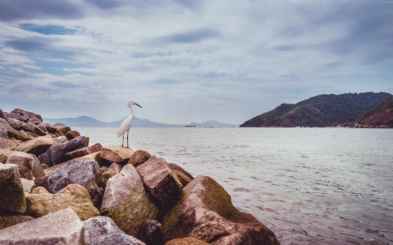 цапля, камни, море
