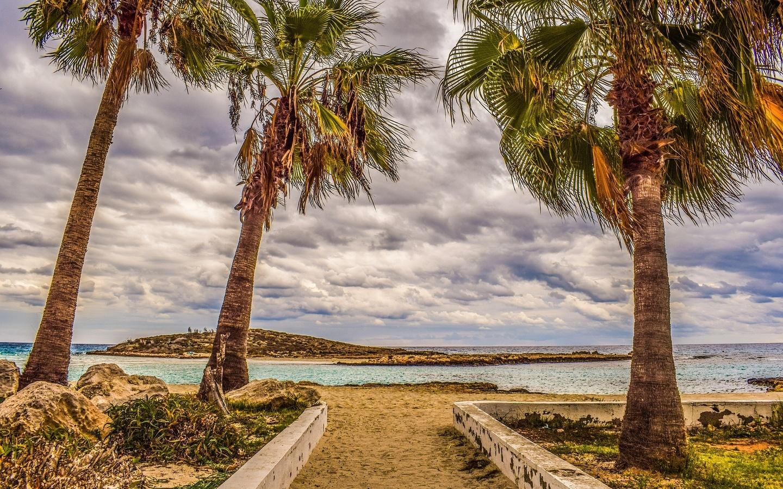 пальмы, берег, море, острова, кипр
