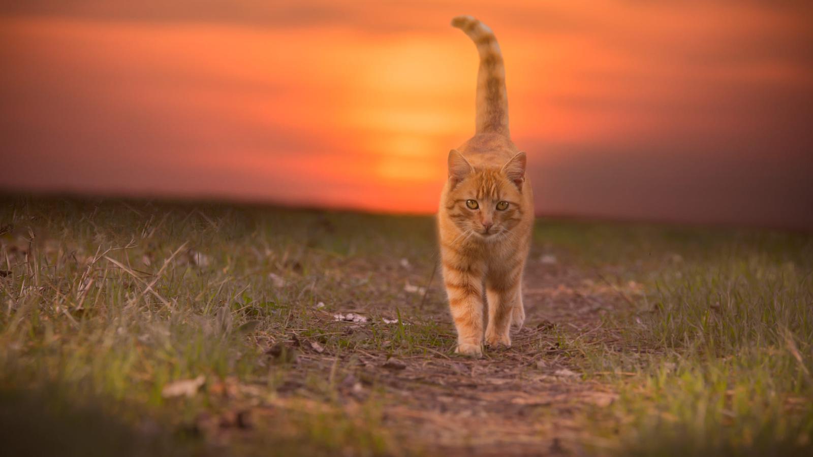 дороги, кошки, природа