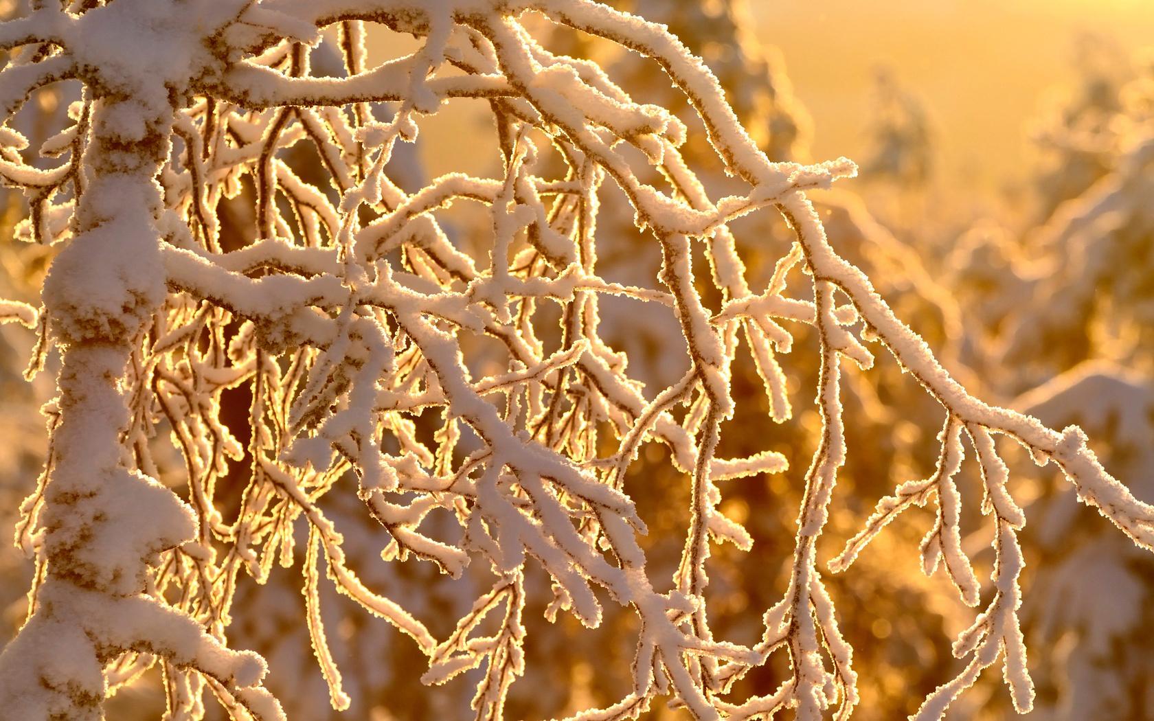 природа, зима, деревья, ветки, снег, hannu koskela contact  фолловить  это вы!, hannu koskela