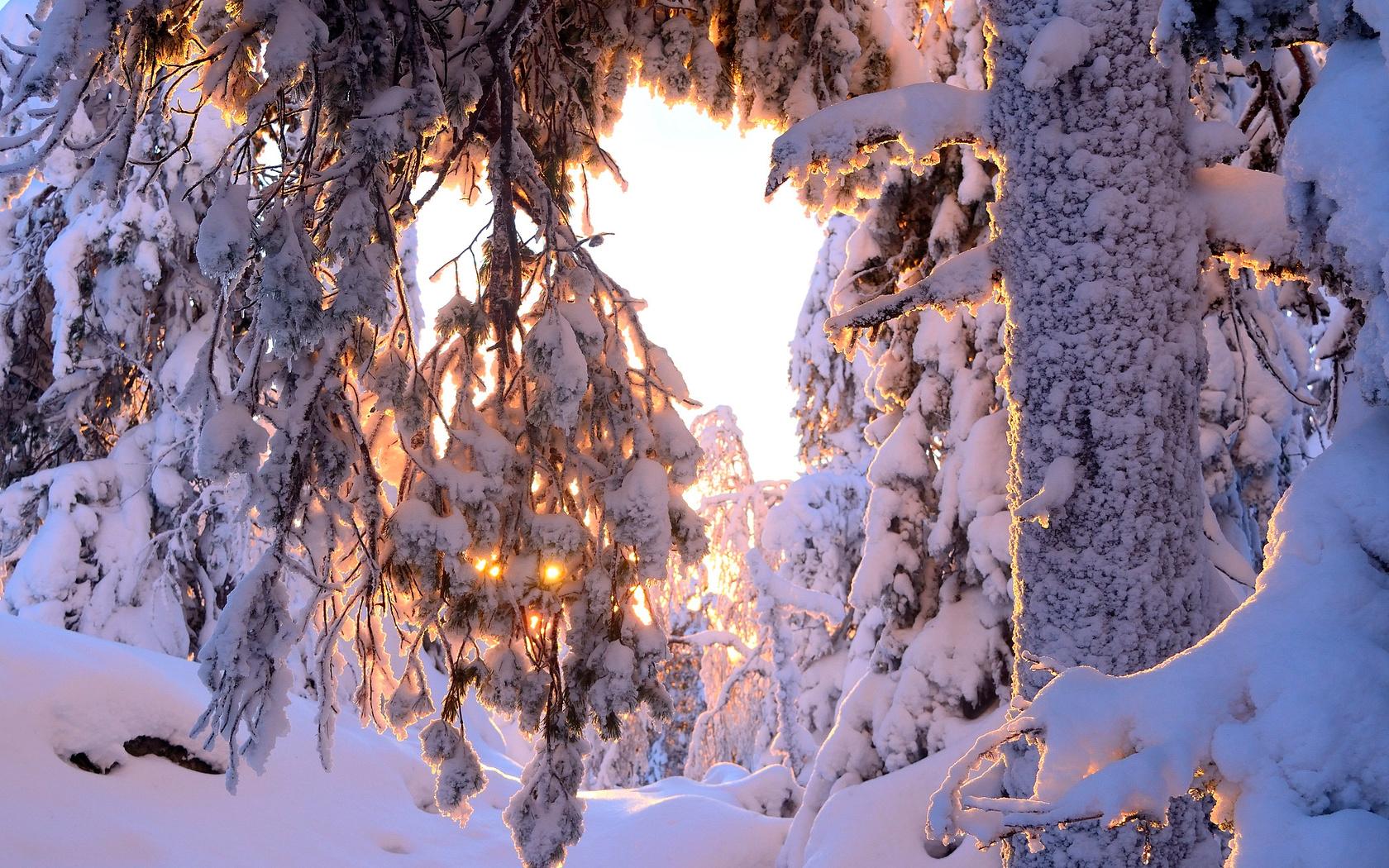 природа, зима, снег, деревья, ствол, ветки, солнце, фотограф hannu koskela, hannu koskela