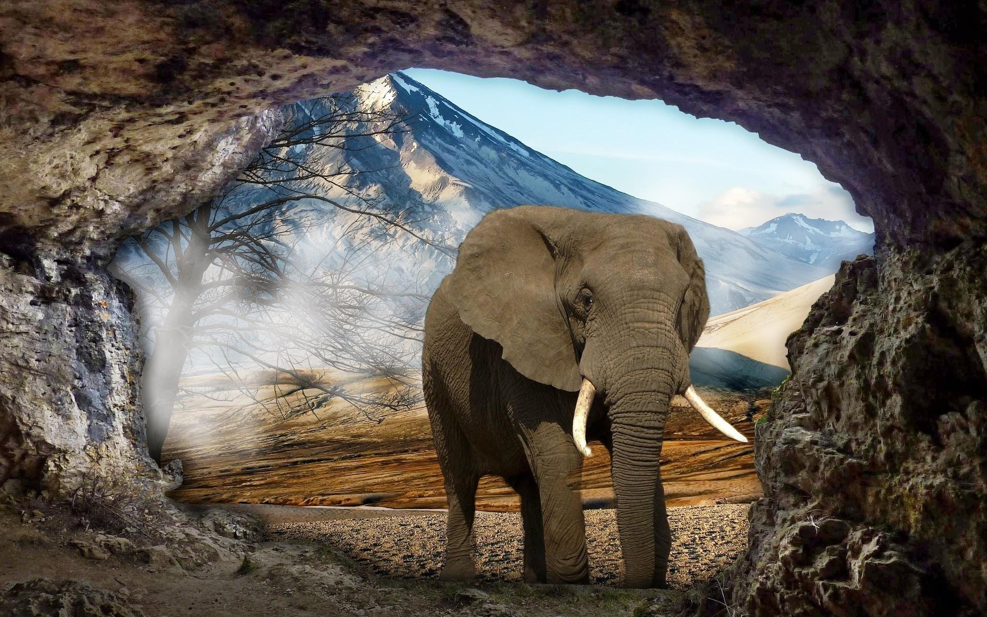 пещера, слон, пейзаж, фотоманипуляция