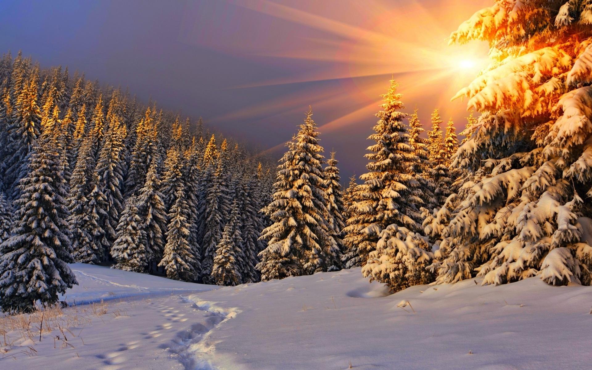 природа, пейзаж, зима, снег, деревья, ели, солнце, лучи, следы