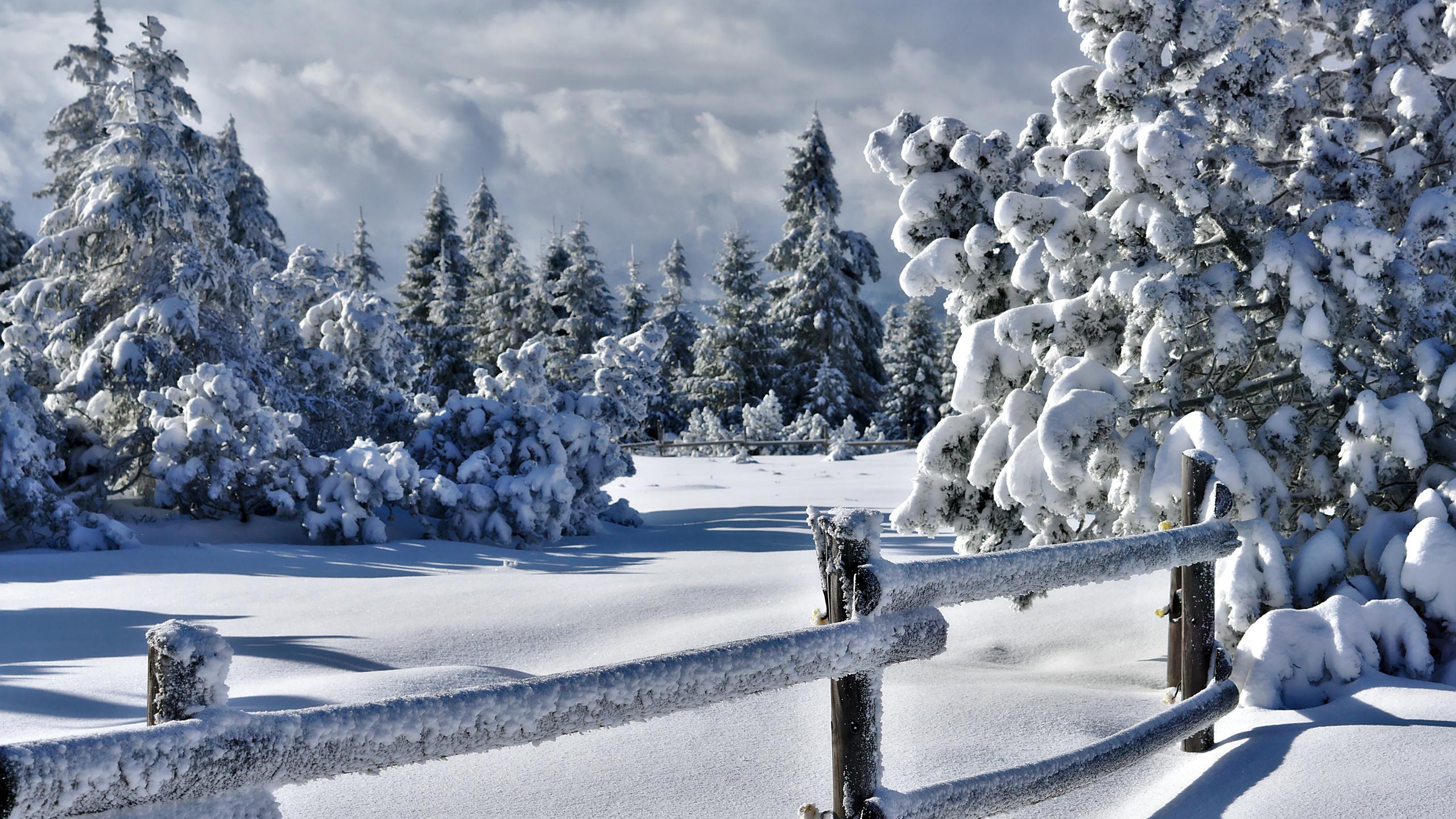 Картинки, картинки красивые со снегом показать