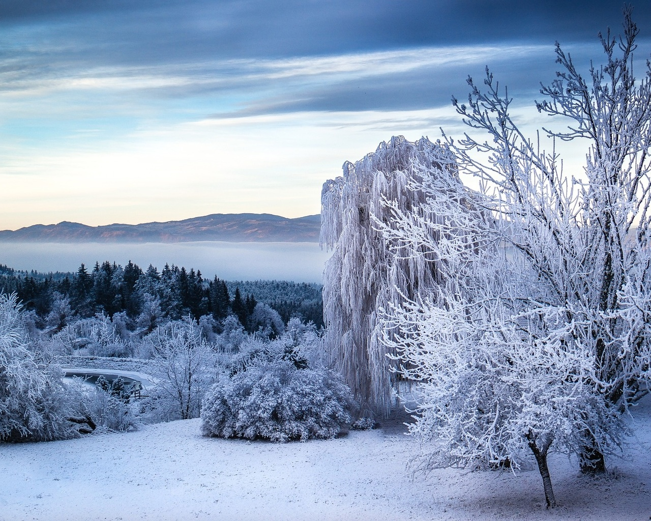 деревья, снег, пейзаж