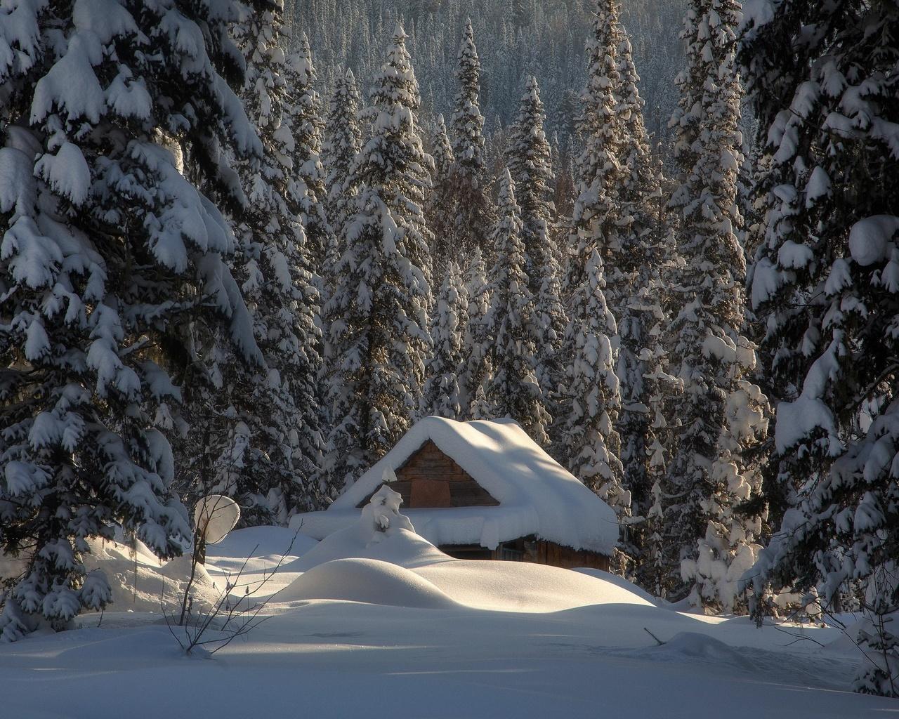природа, деревья, лес, дом, ели, зима, хижина, снег, сугробы