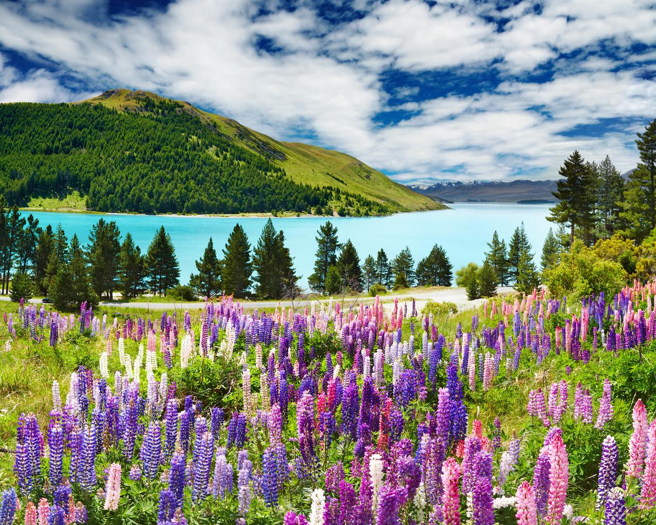 природа, пейзаж, лето, холм, озеро, цветы, люпины, деревья, леса