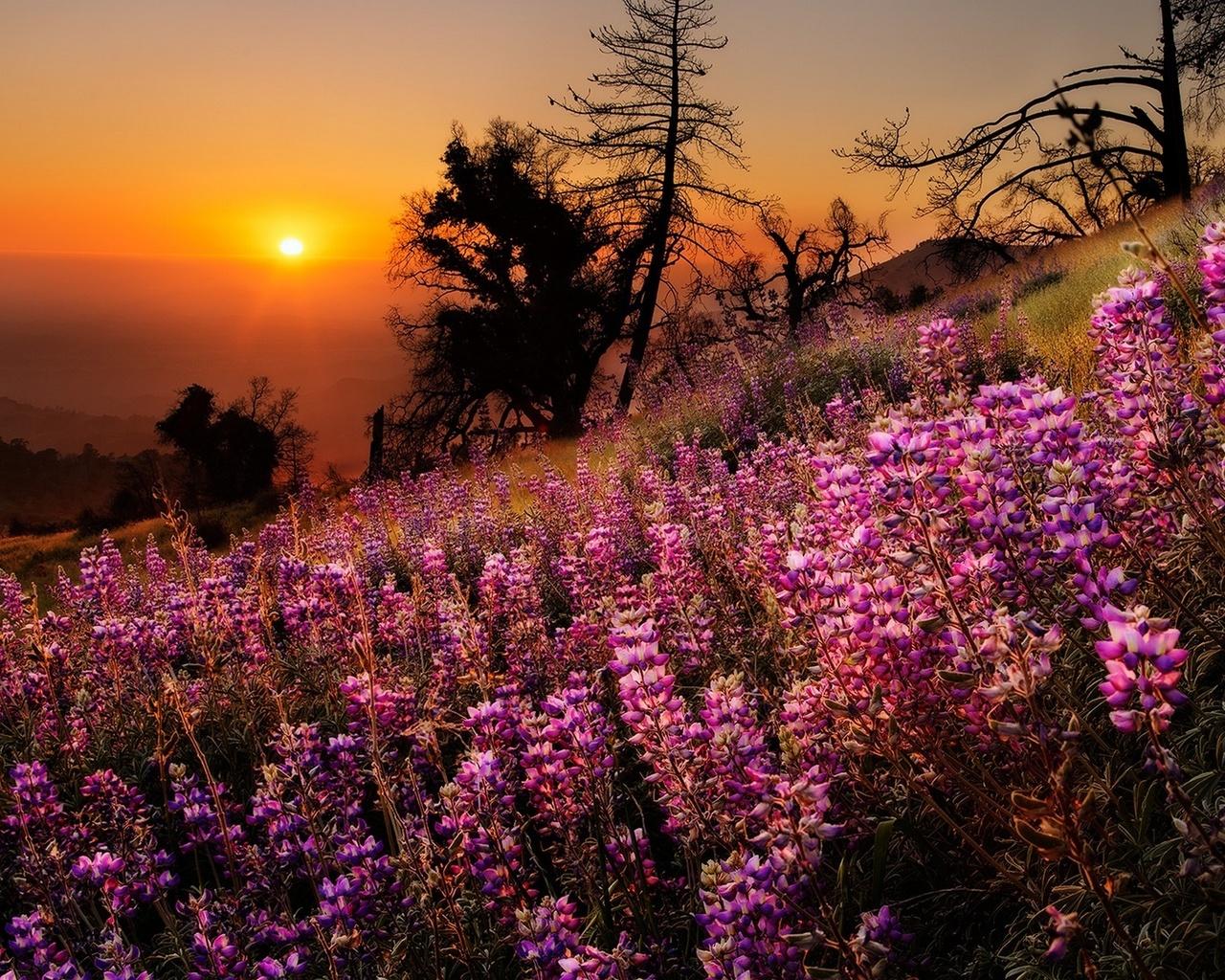 природа, пейзаж, лето, закат, солнце, склон, цветы, травы, деревья