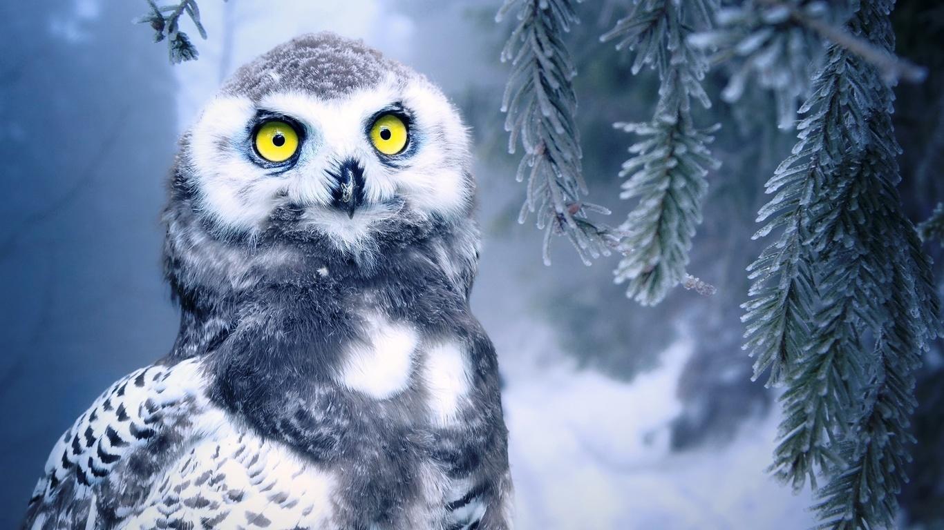 сова, ветки, снег, боке