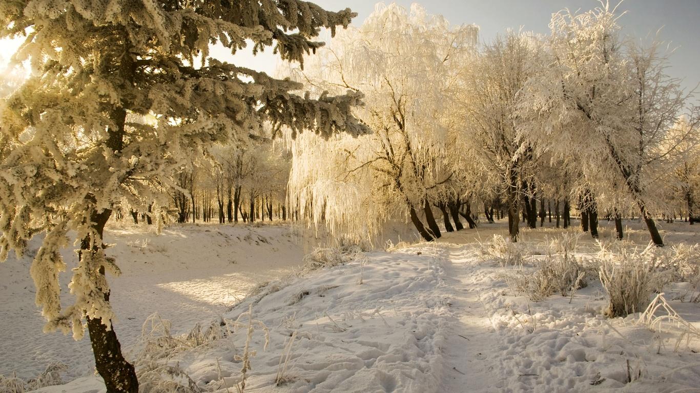 природа, сугробы, снег, холод, иней, деревья, тропинка, зима, изморозь, пейзаж