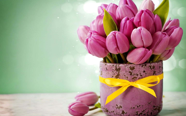 горшок, цветы, тюльпаны, бантик, боке, лента