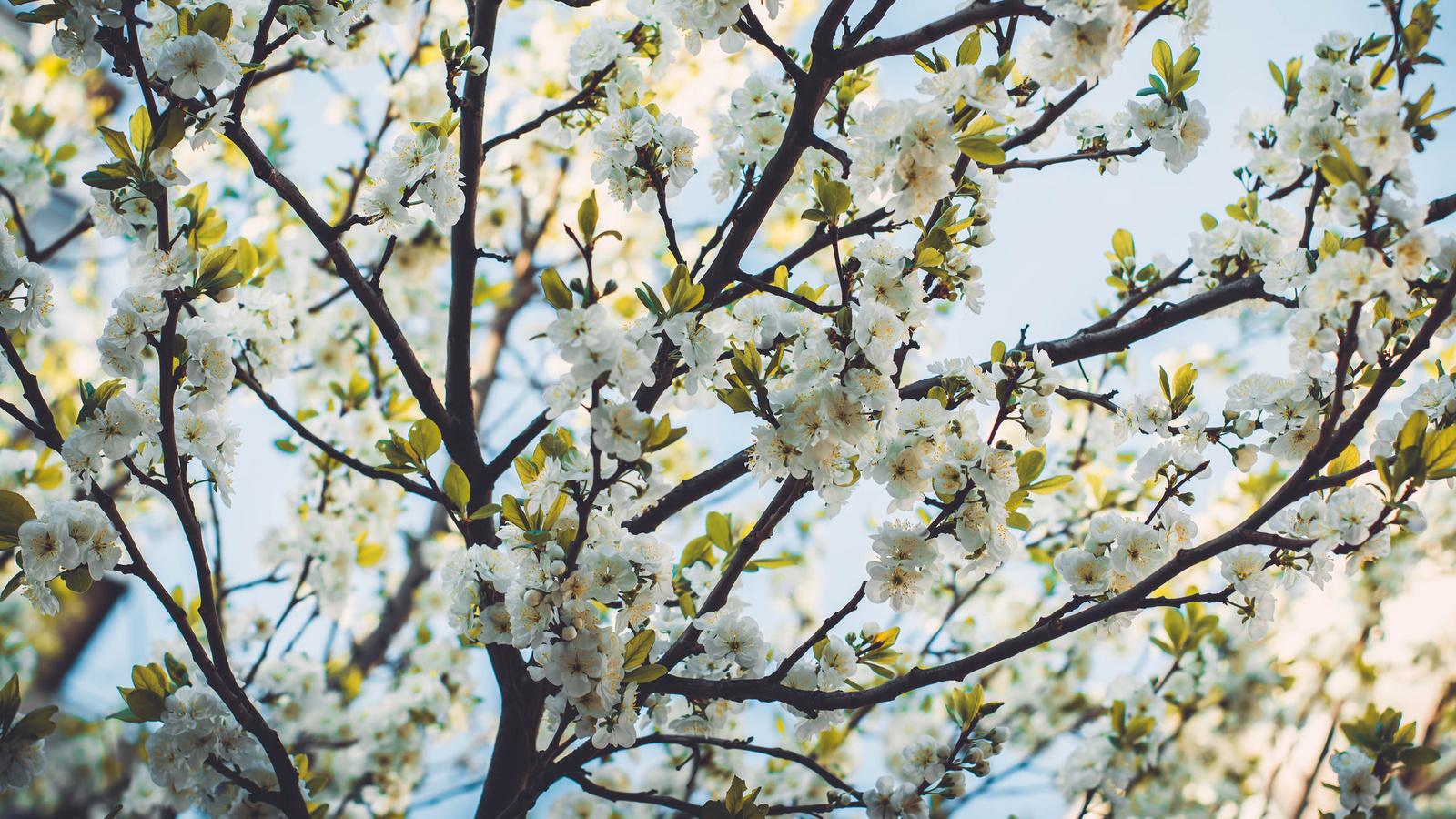 цветы, природа, деревья, фотограф irina kostenich