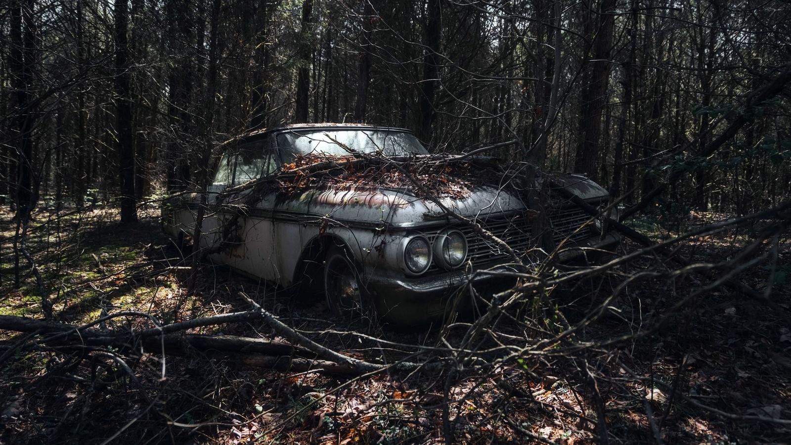 лес, ветки, авто, креатив