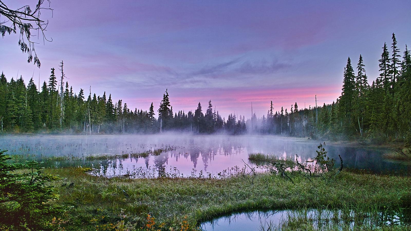 природа, пейзаж, лето, рассвет, деревья, леса, травы, болото, туман, утро