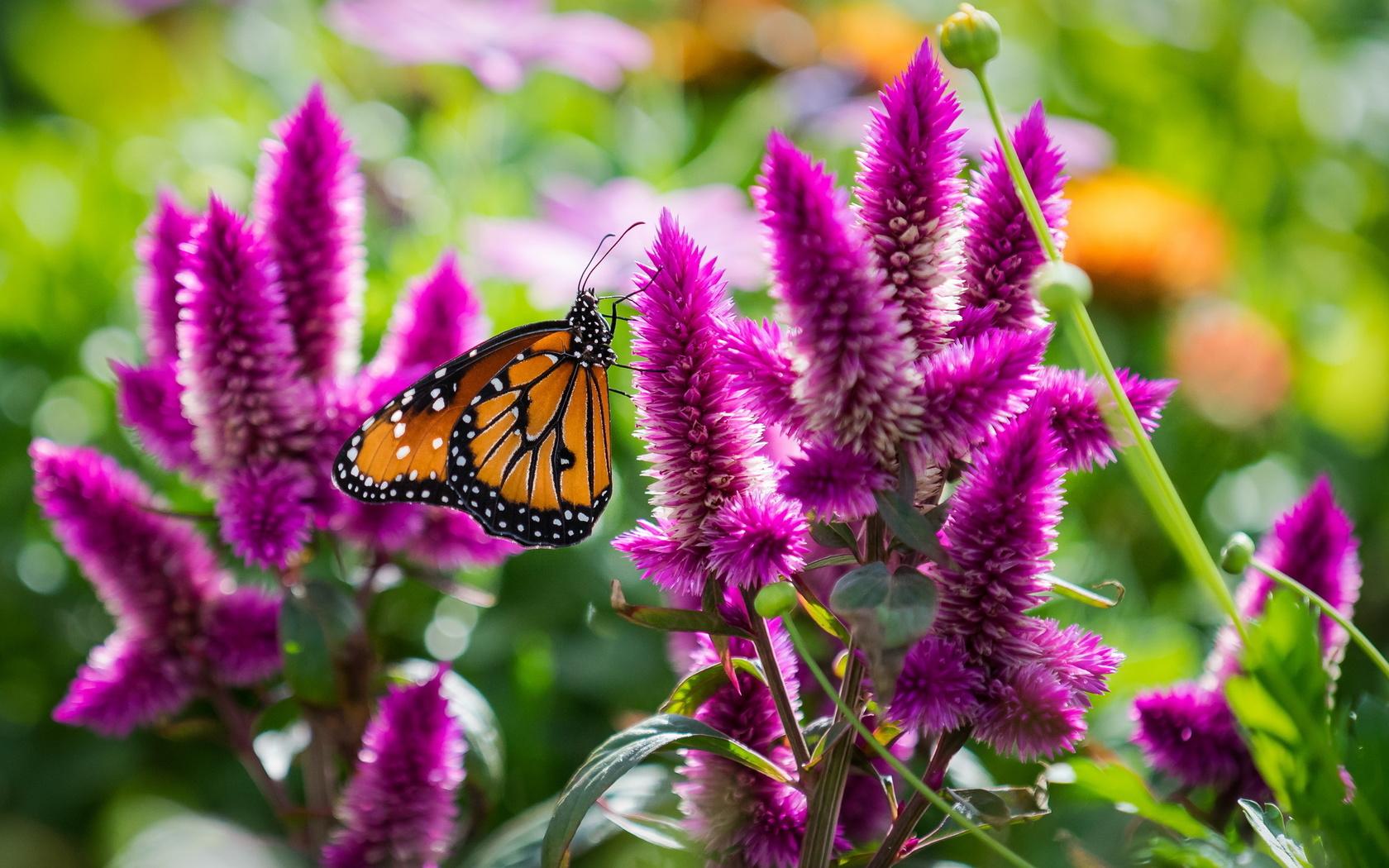 Лето картинки цветы бабочки
