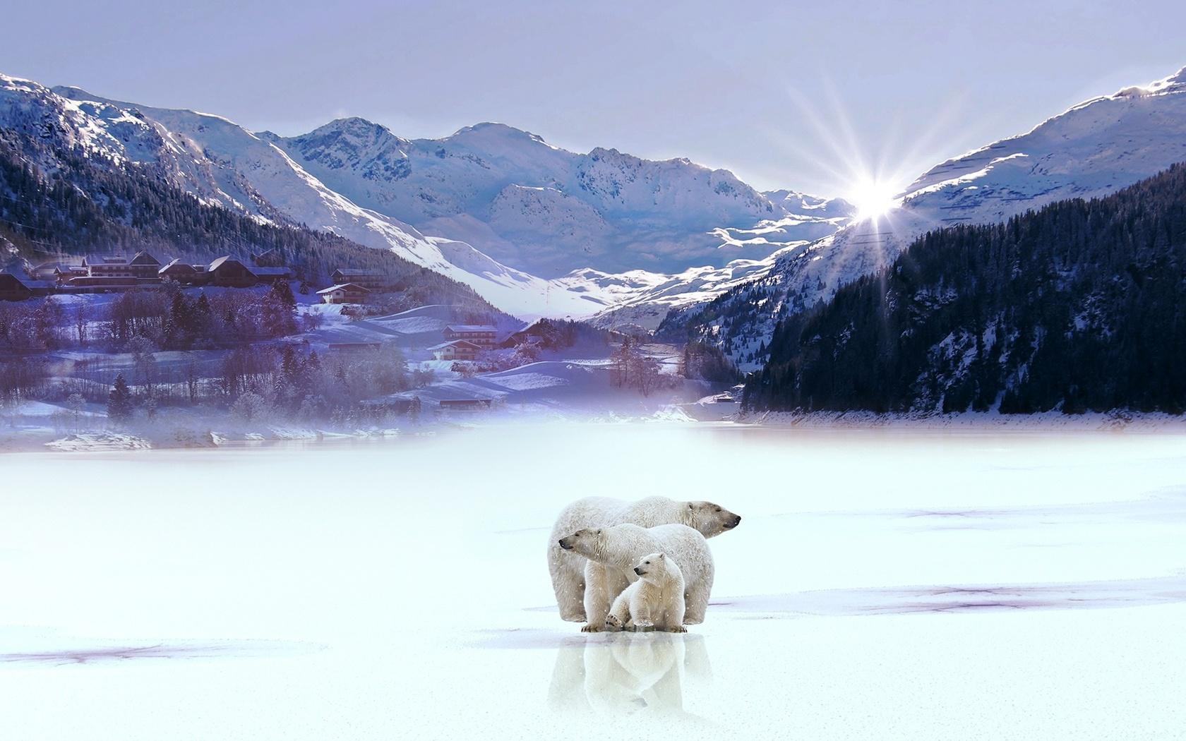 медведи, лед, озеро, горы