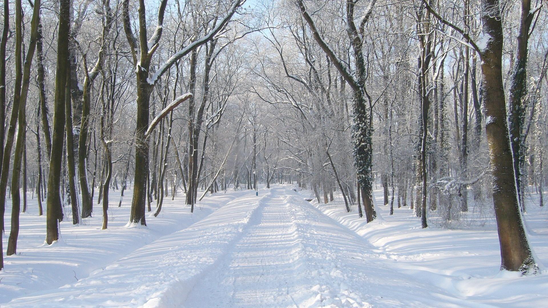 деревья, дорога, снег