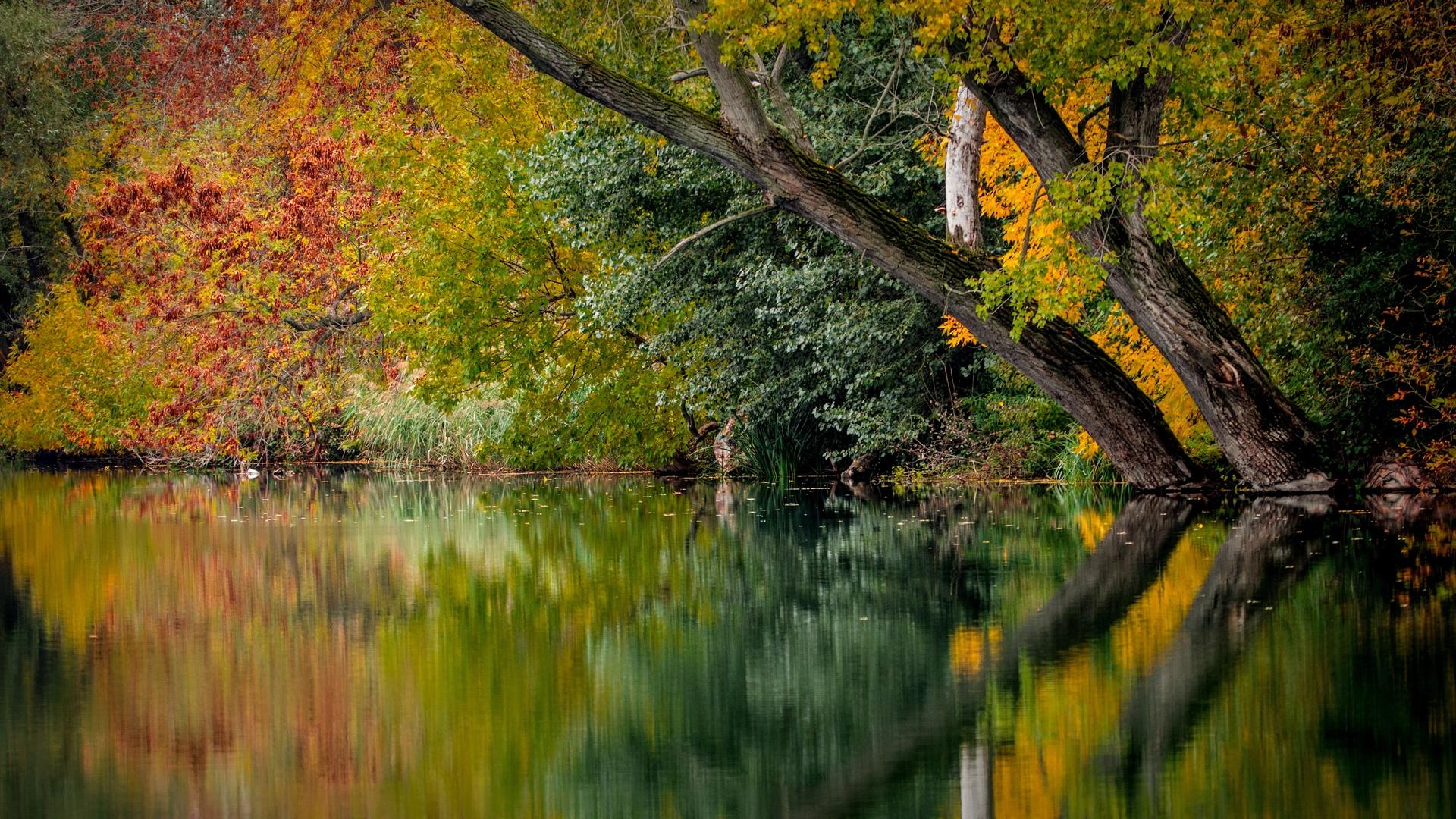 природа, водоём, деревья, стволы, осень, отражение