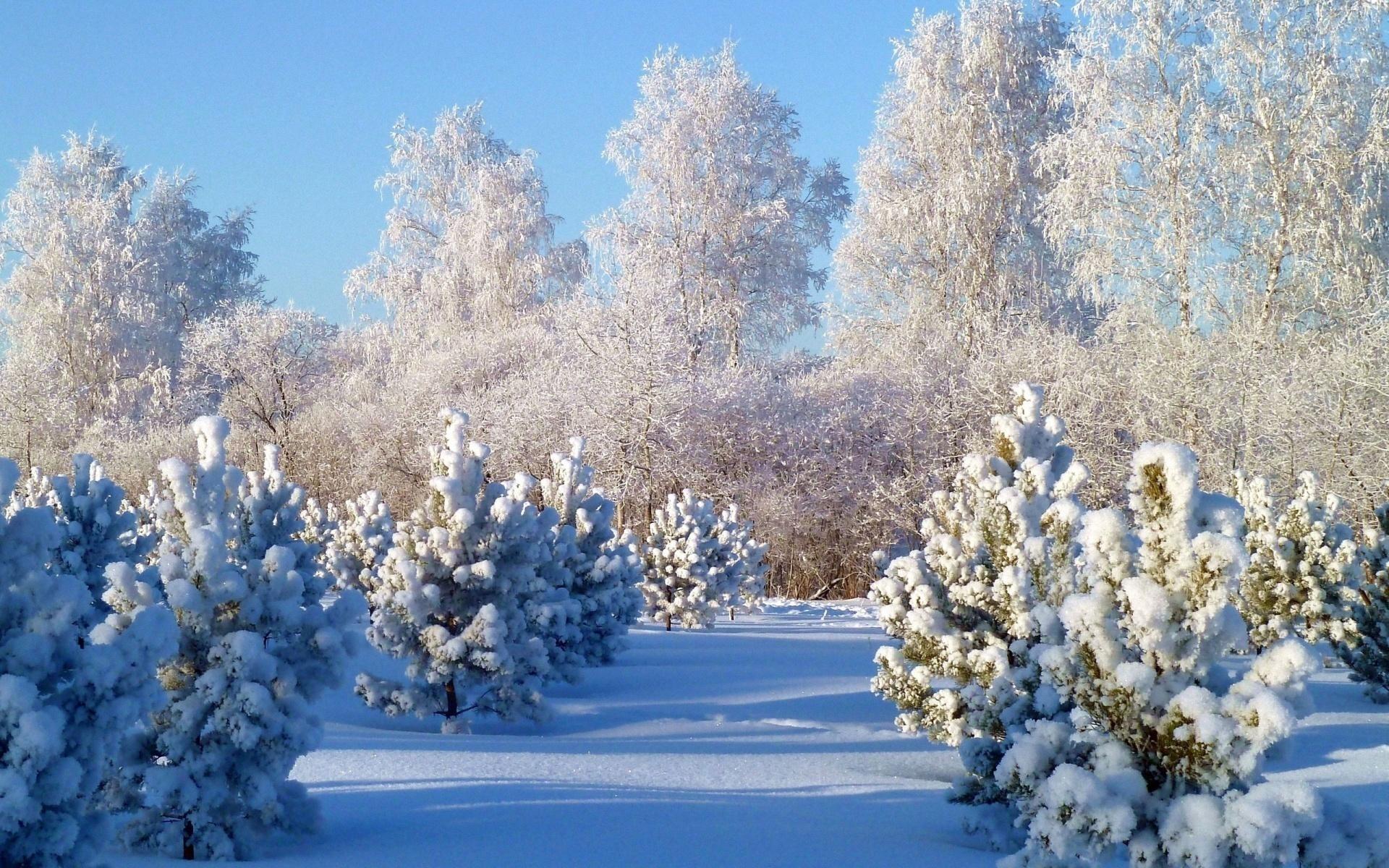 Картинки зимней тематики, день охраны красивые