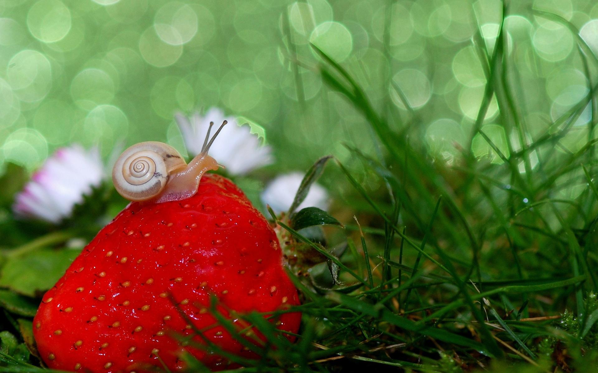 макро, трава, ягода, клубника, улитка, боке