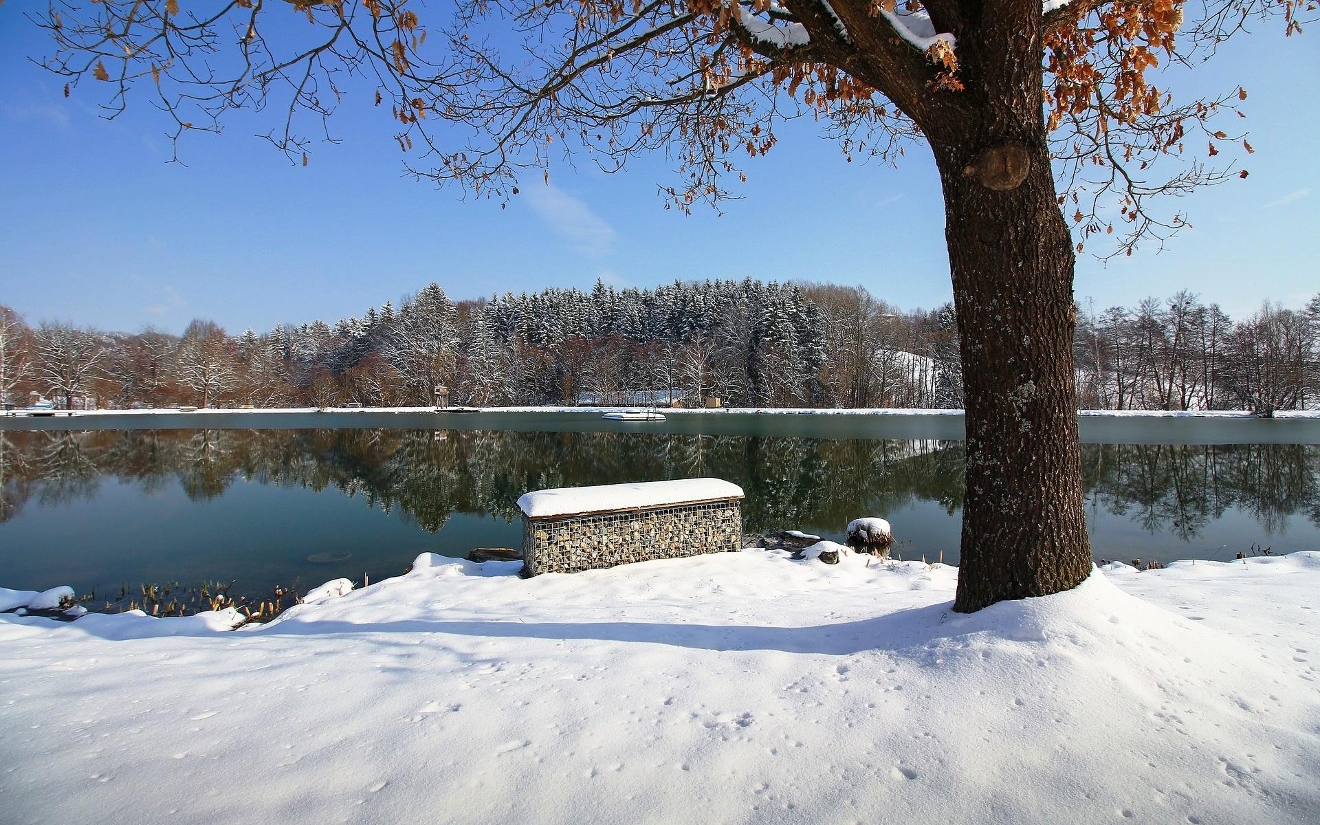 снег, река, деревья