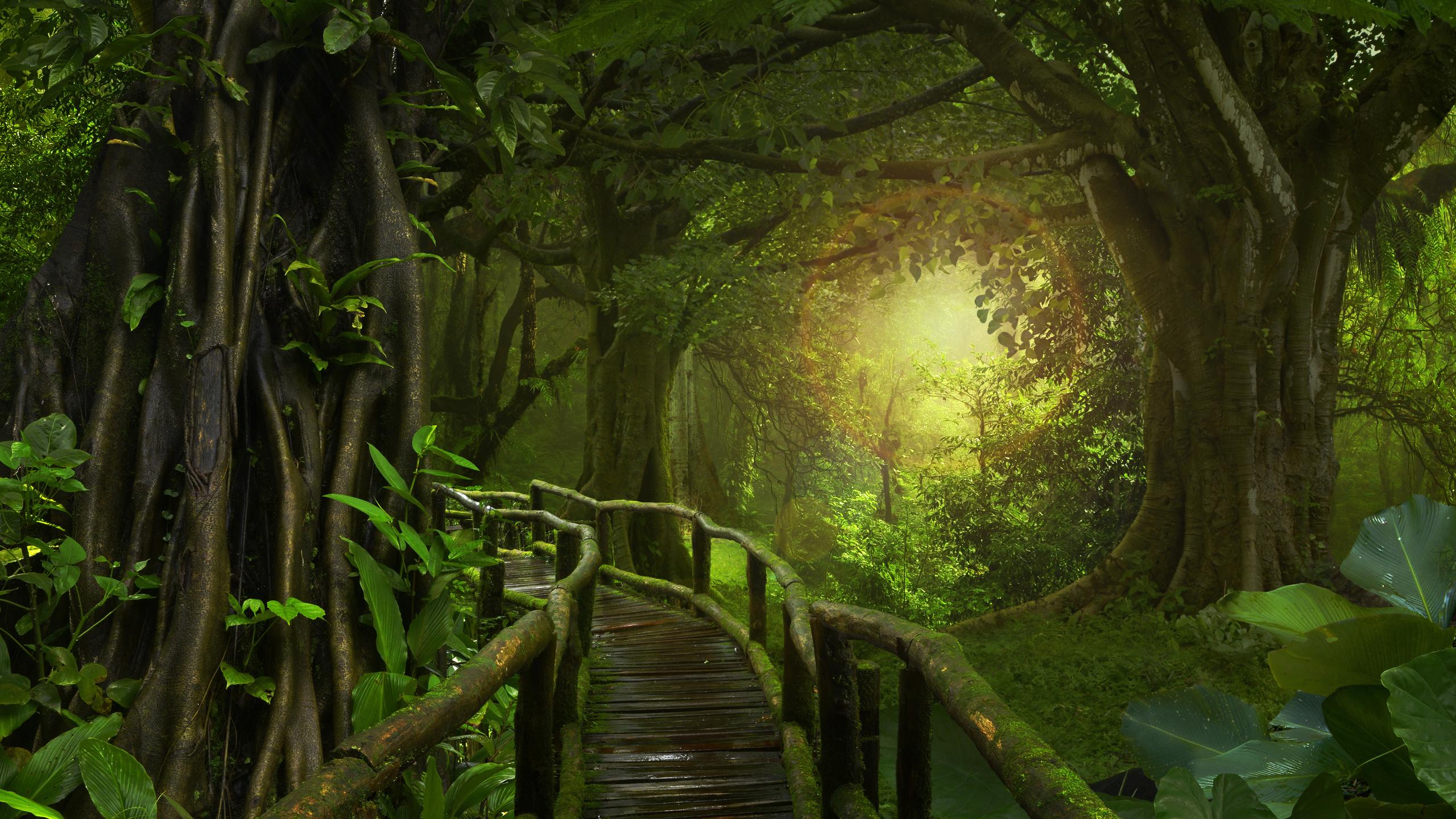 лес, мост, jungle, мох, природа, джунгли