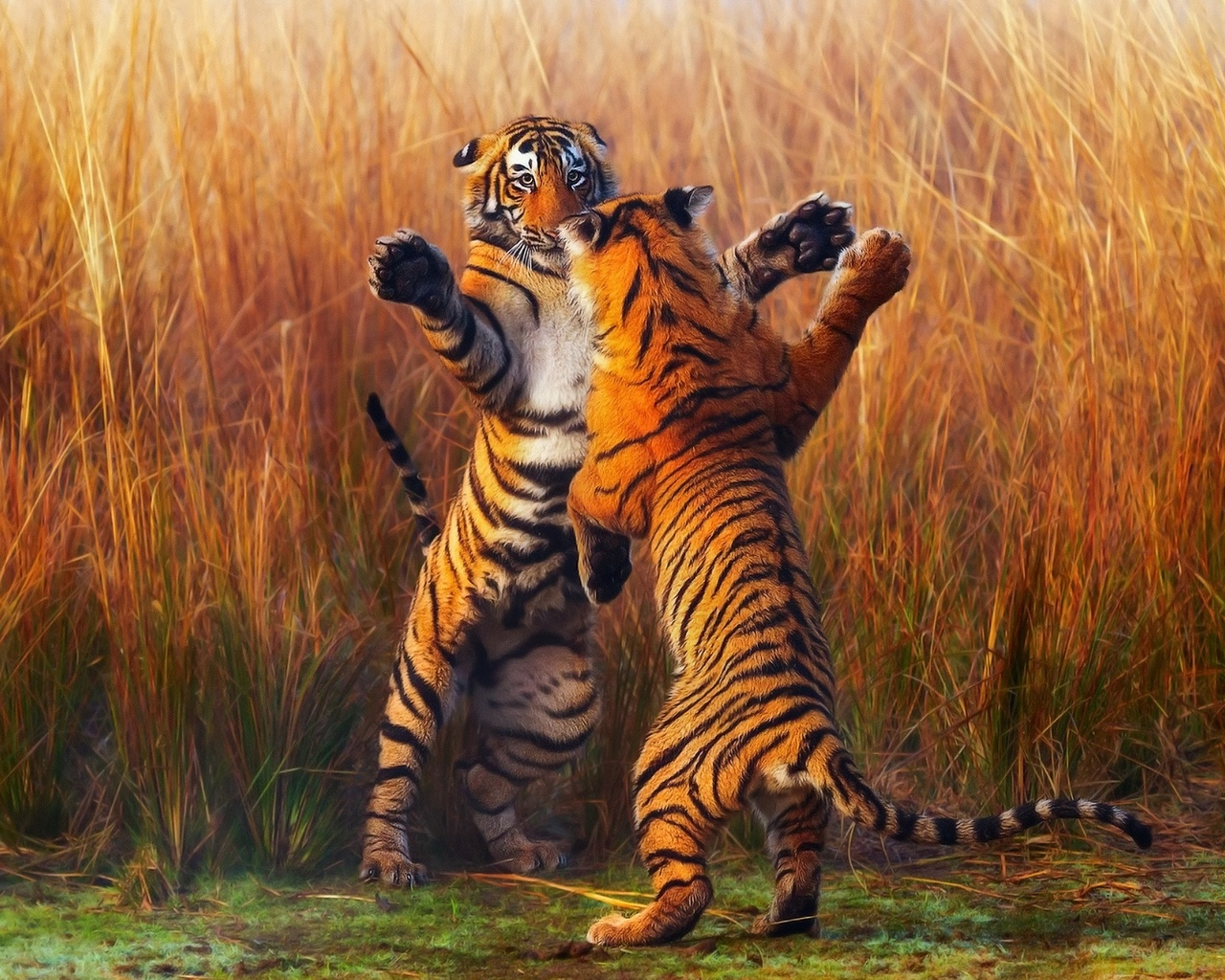 comparing the powerful images of the tyger and the war photographer essay 82 4 / visual rhetoric: images as arguments 4 appeals to the eye 83 would you persuade, speak of interest, not reason ben franklin there are two levers for moving men— interest and fear.