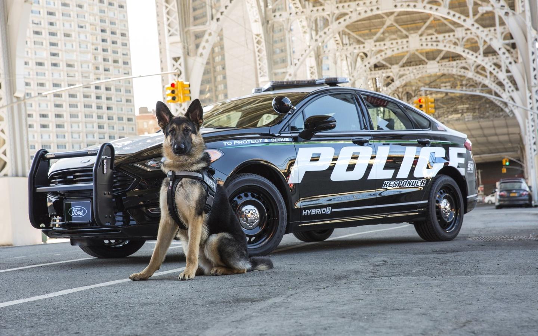 форд, гибрид, седан, ford, police