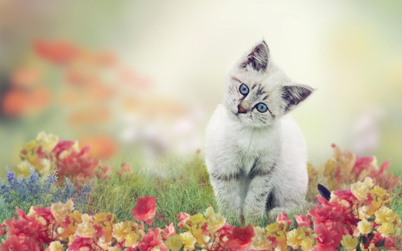 животное, котёнок, детёныш, природа, лето, трава, цветы