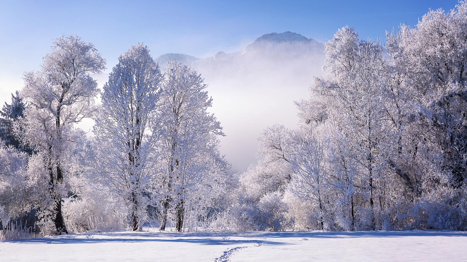 florian warnecke, пейзаж, бавария, деревья, германия, природа, зима, горы, снег, туман, тропинка