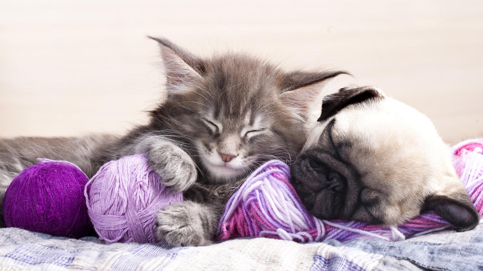 Картинки доброй ночи с животными