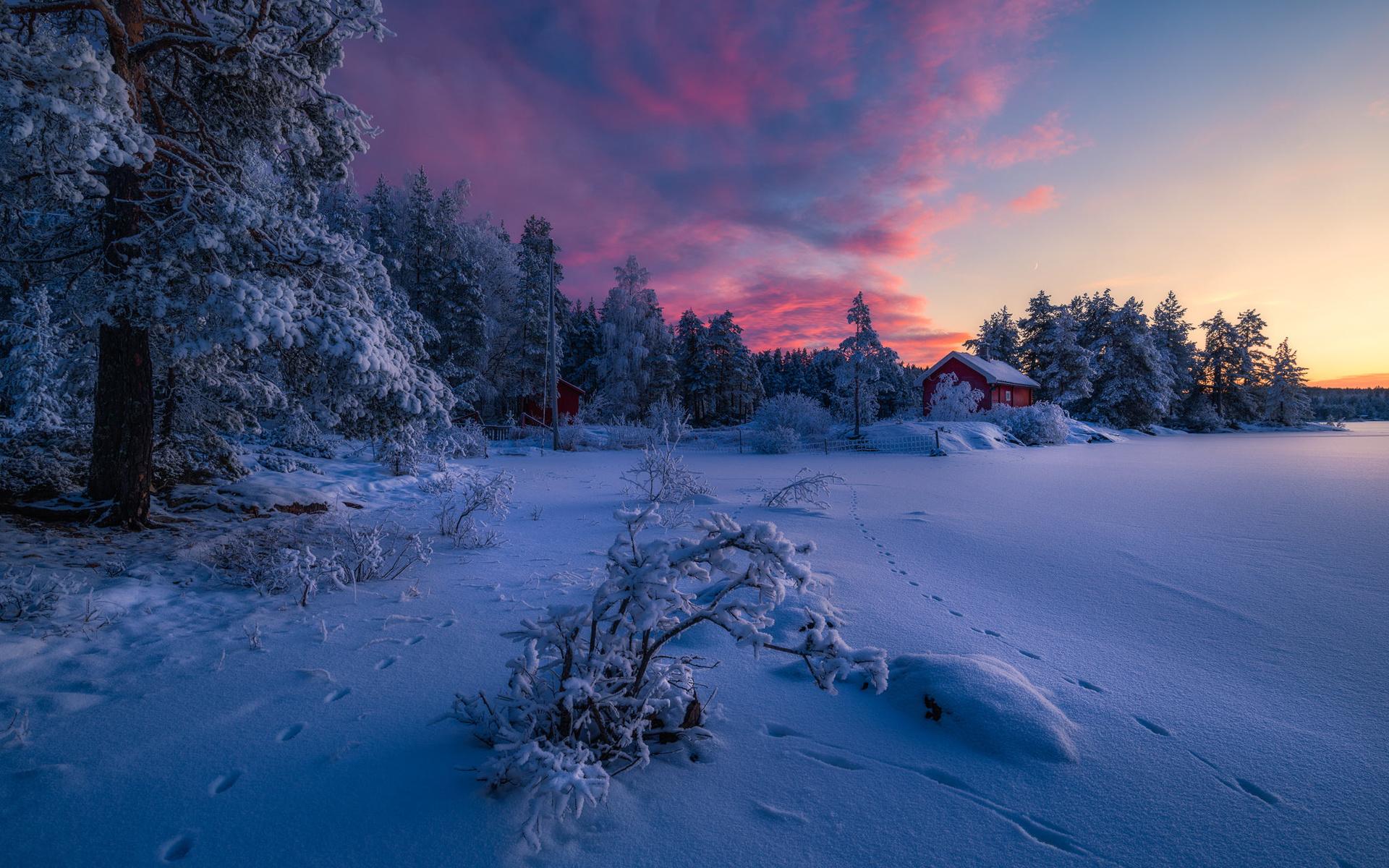 расширенным списком красивое фото зимнего пейзажа картинки фиолетовые