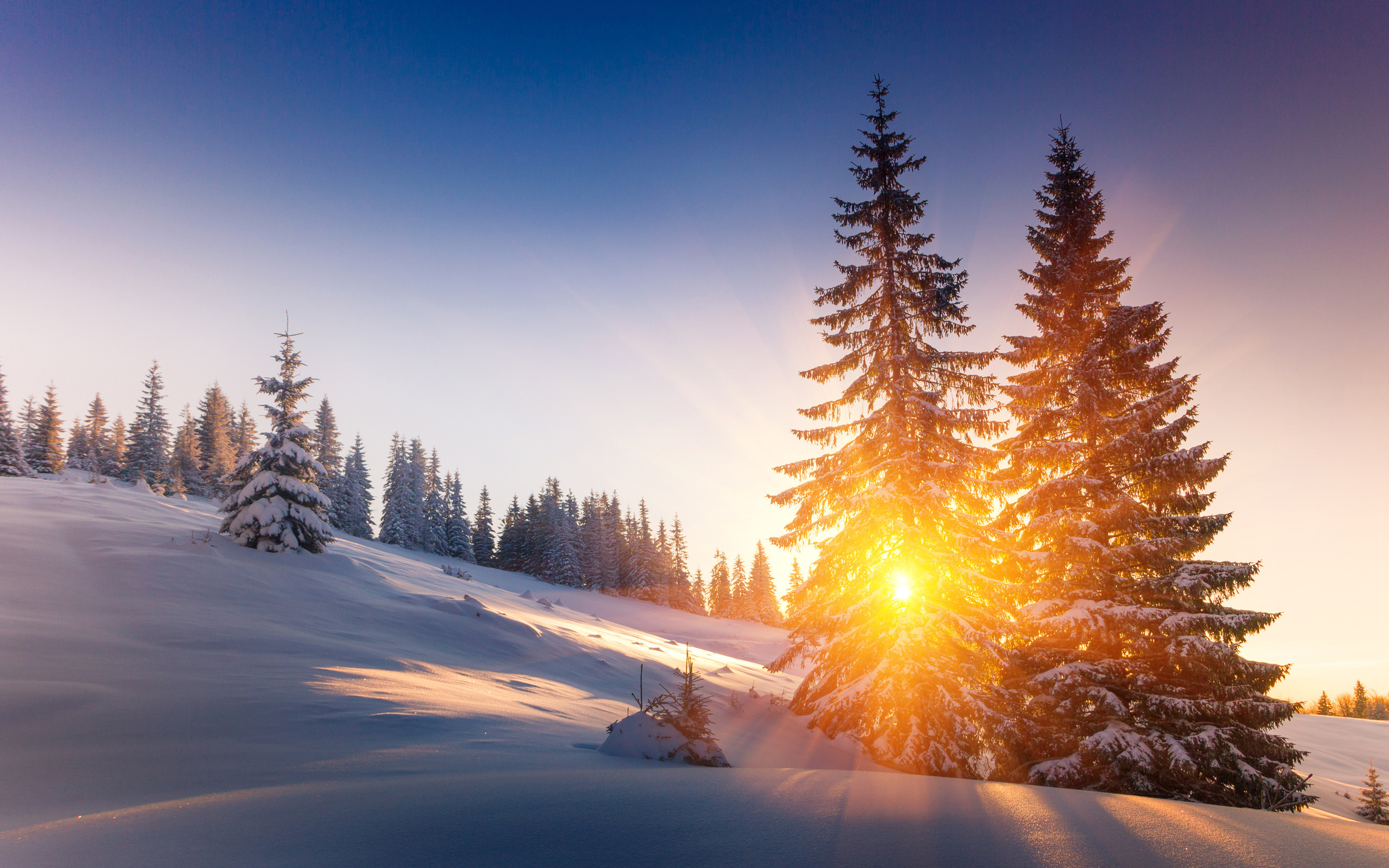 природа, пейзаж, зима, снег, склон, деревья, ели, солнце, лучи, тени