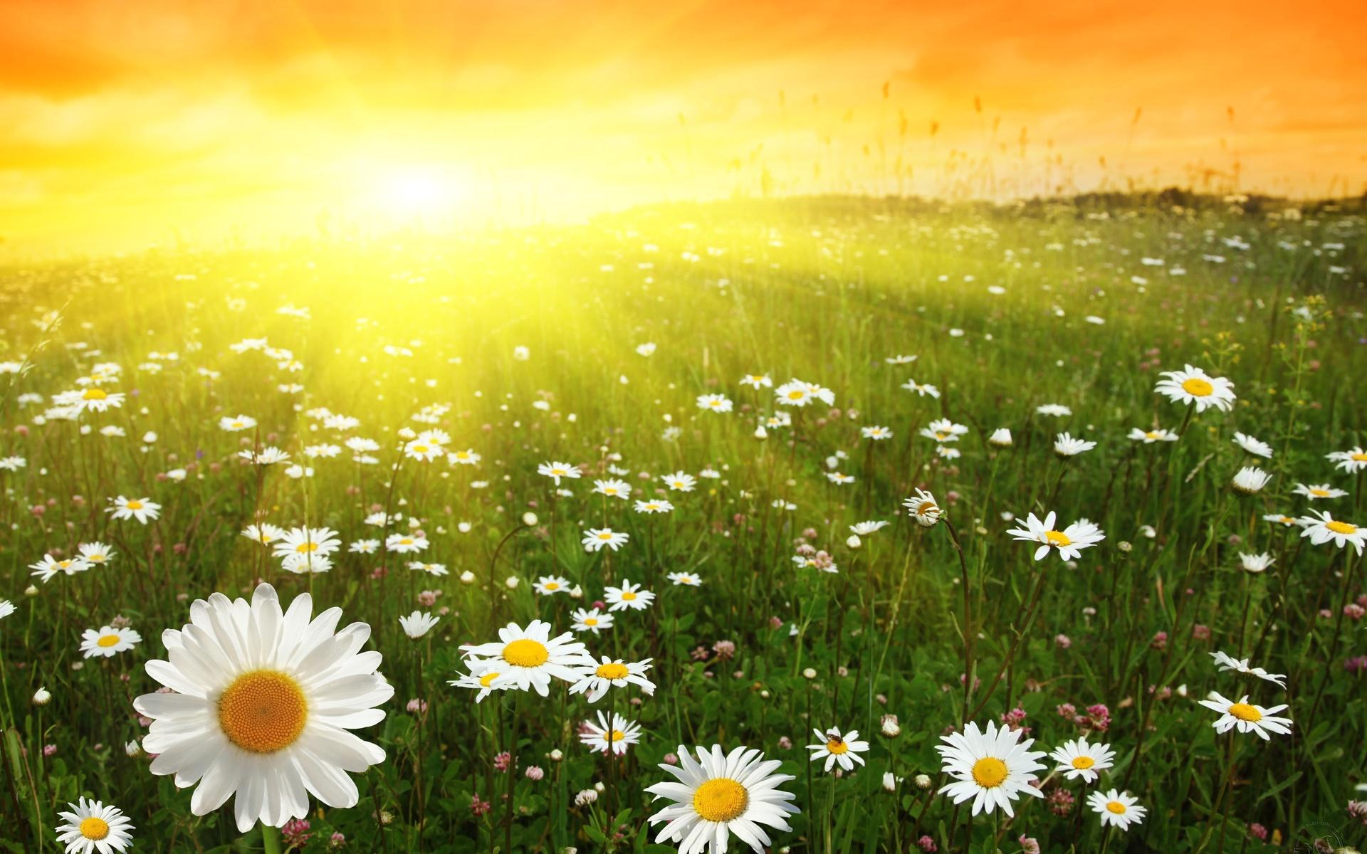 Картинки накосячил, солнце открытка