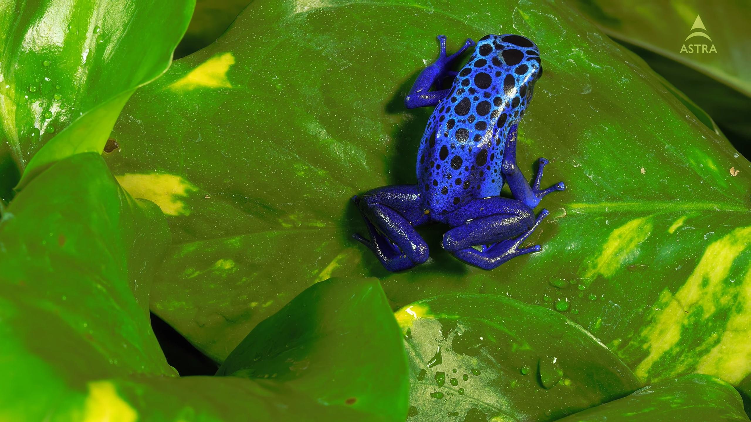 картинки голубых лягушек она задохнулась, так