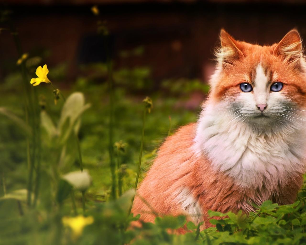 животное, кот, кошка, взгляд, природа, лето, трава