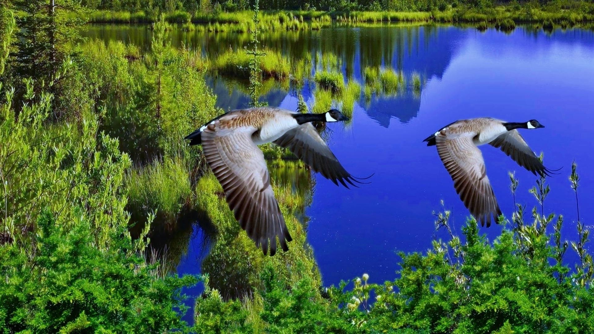 Открытки природа и птицы