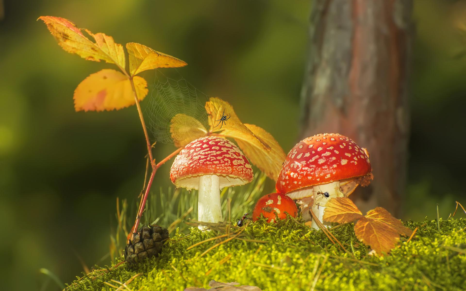 Осенние грибы открытка, апреля день