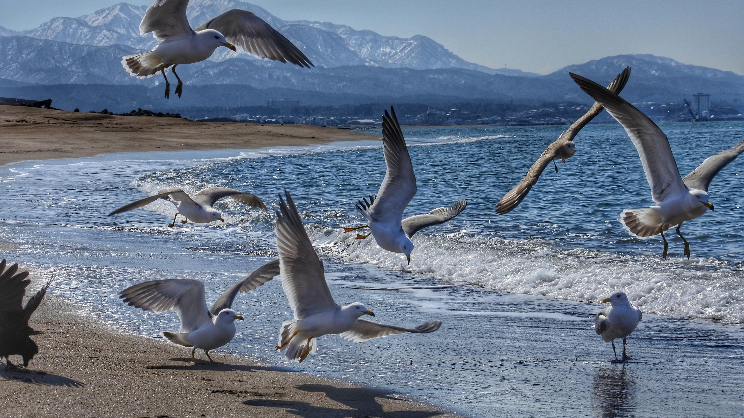 комплекс природа картинки чайки что