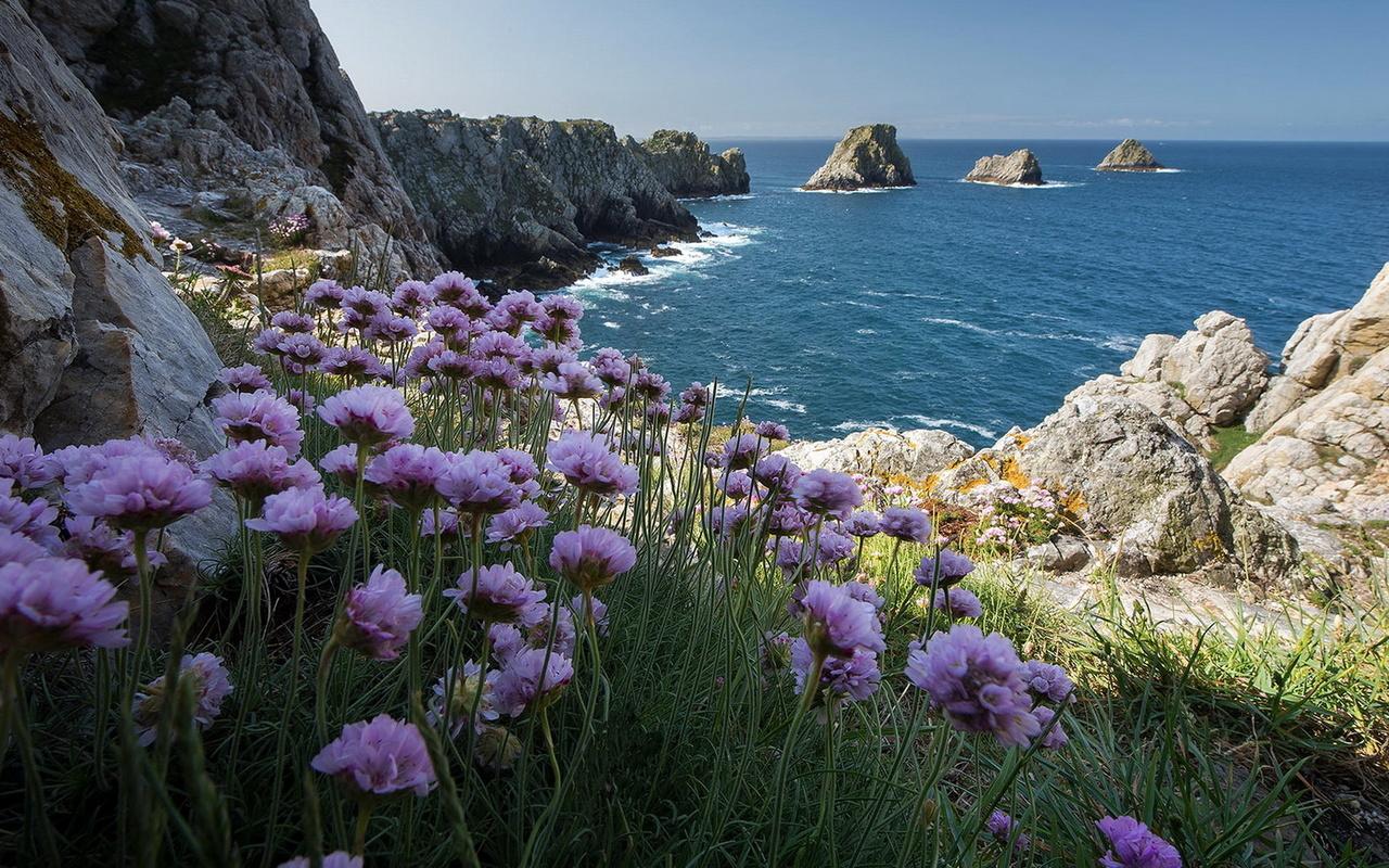 природа, пейзаж, море, берег, скалы, цветы