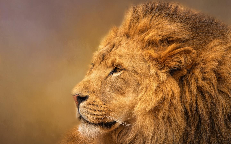 Гиф, классные картинки лев